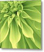 Green Sherbet Metal Print