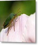 Green Shieldbug 2 Metal Print