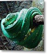 Green Snake Metal Print