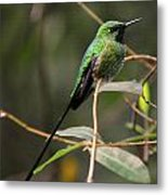 Green Tailed Trainbearer Metal Print