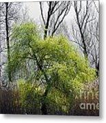 Green Tree And Pampas Grass Metal Print