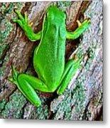 Green Tree Frog Metal Print