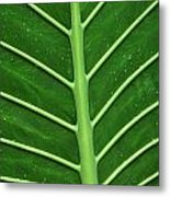 Green Veiny Leaf 1 Metal Print