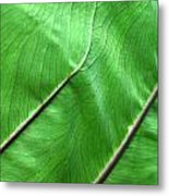 Green Veiny Leaf 2 Metal Print