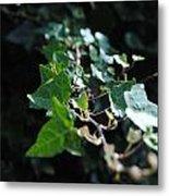 Green Vine Metal Print