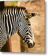 Grevys Zebra Metal Print