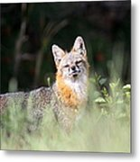 Grey Fox - The Man Metal Print