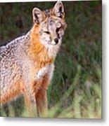 Grey Fox - Vantage Point Metal Print
