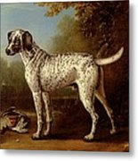 Grey Spotted Hound Metal Print
