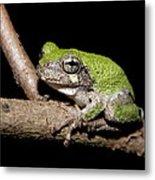 Grey Tree Frog Metal Print