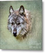 Grey Wolf Portrait Metal Print