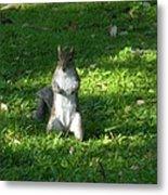 Greynolds Park Squirrel Metal Print