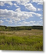 Griggstown Native Grassland Preserve Metal Print by David Letts