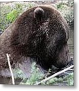 Grizzley - 0006 Metal Print