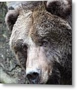 Grizzley - 0015 Metal Print