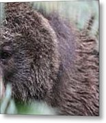 Grizzley - 0016 Metal Print