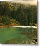 Grizzly Bear Fishing In Chilkoot River Metal Print