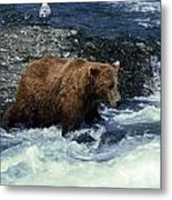 Grizzly Bear Fishing Metal Print