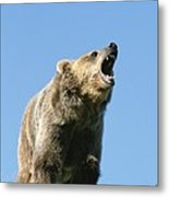 Grizzly Bear Vocalizing Metal Print