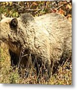 Grizzly Camouflage Metal Print