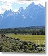 Grizzly Country Metal Print