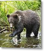 Grizzly Cub Catching Fish In Fish Creek Metal Print
