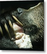 Grizzly Eating Metal Print