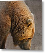 Grizzly Hanging Head Metal Print