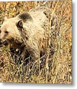 Grizzly In The Brush Metal Print