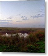 Ground And Sea Fog Metal Print