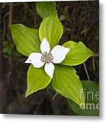 Ground Flower Metal Print