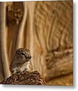 Ground Squirrel At Monument Valley Metal Print