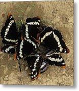 Group Of Butterflies Metal Print
