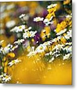 Group Of Daisies Metal Print
