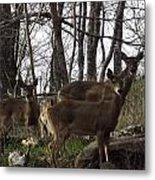 Group Of Deer Metal Print