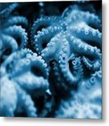Group Of Octopuses Metal Print by Victor Habbick Visions
