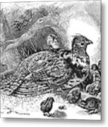 Grouse And Young Metal Print