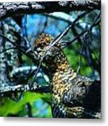 Grouse Metal Print by Sarah Buechler