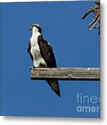 Guarding The Nest Metal Print