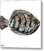 Gulf Flounder Metal Print