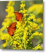 Gulf Fritilaries On Golden Rod Metal Print