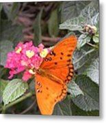 Gulf Fritillary Butterfly At Work Metal Print