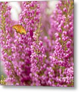 Gulf Fritillary Butterfly On Passionate Pink Flowers Metal Print