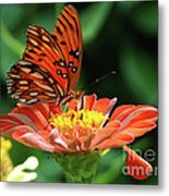 Gulf Fritillary On Zinnia Metal Print