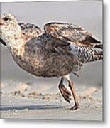 Gull Taking Off Metal Print
