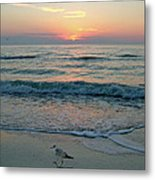 Gulls At Sunset On The Gulf Metal Print