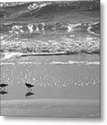 Gulls Taking A Walk Metal Print