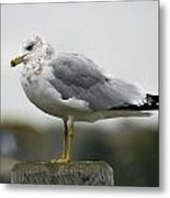 Gullwatch Metal Print