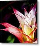 Guzmania Apache Flower Metal Print