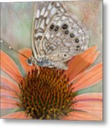 Hackberry Emplorer Butterfly Metal Print